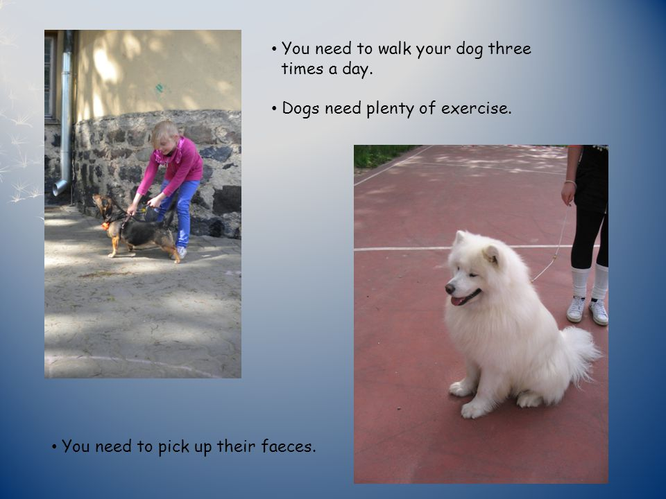 You need to walk your dog three times a day. Dogs need plenty of exercise.
