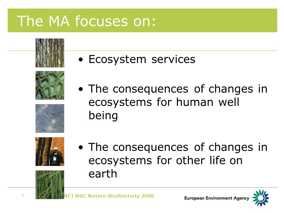 EIONET NRC Nature Biodiversity 20087 The MA focuses on: Ecosystem services The consequences of changes in ecosystems for human well being The consequences of changes in ecosystems for other life on earth