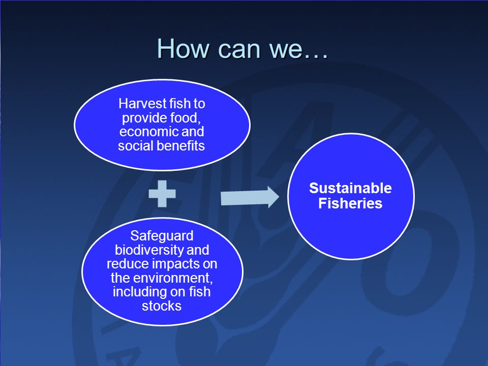 How can we… Harvest fish to provide food, economic and social benefits Safeguard biodiversity and reduce impacts on the environment, including on fish stocks Sustainable Fisheries