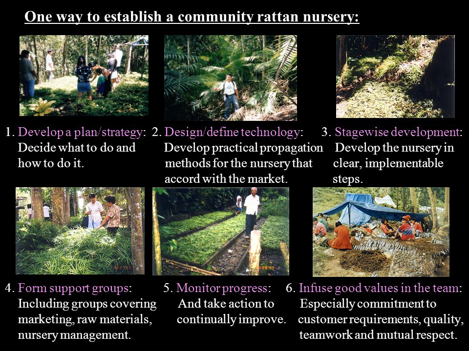 Main development attributes of a community rattan nursery Reduces dependence on timber resources and thereby increases environmental protection and conservation.