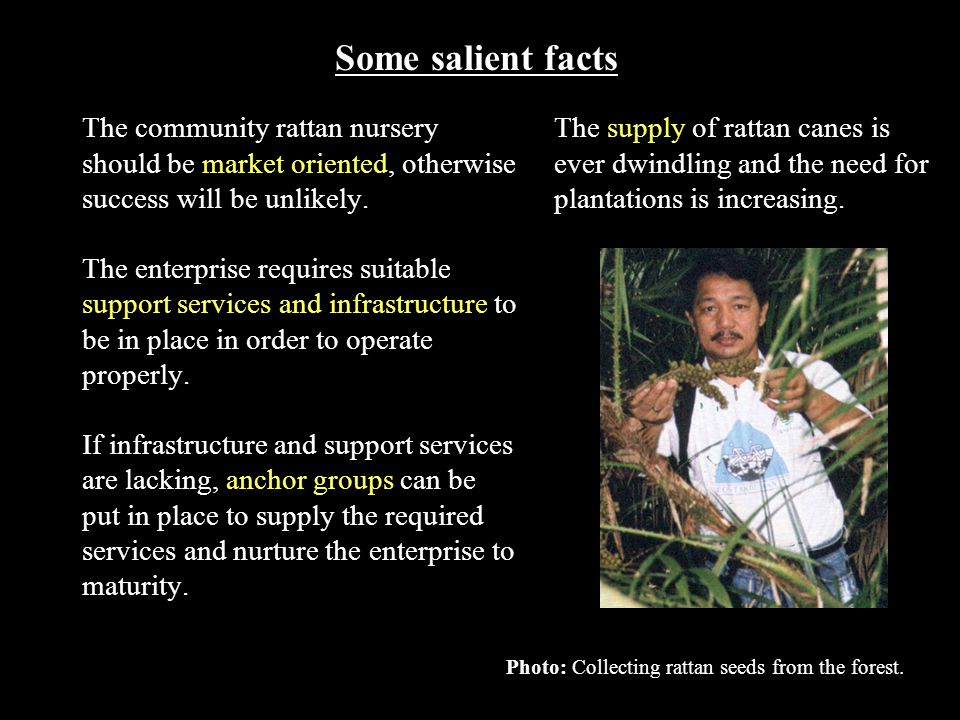 The supply of rattan canes is ever dwindling and the need for plantations is increasing. Some salient facts The community rattan nursery should be mar