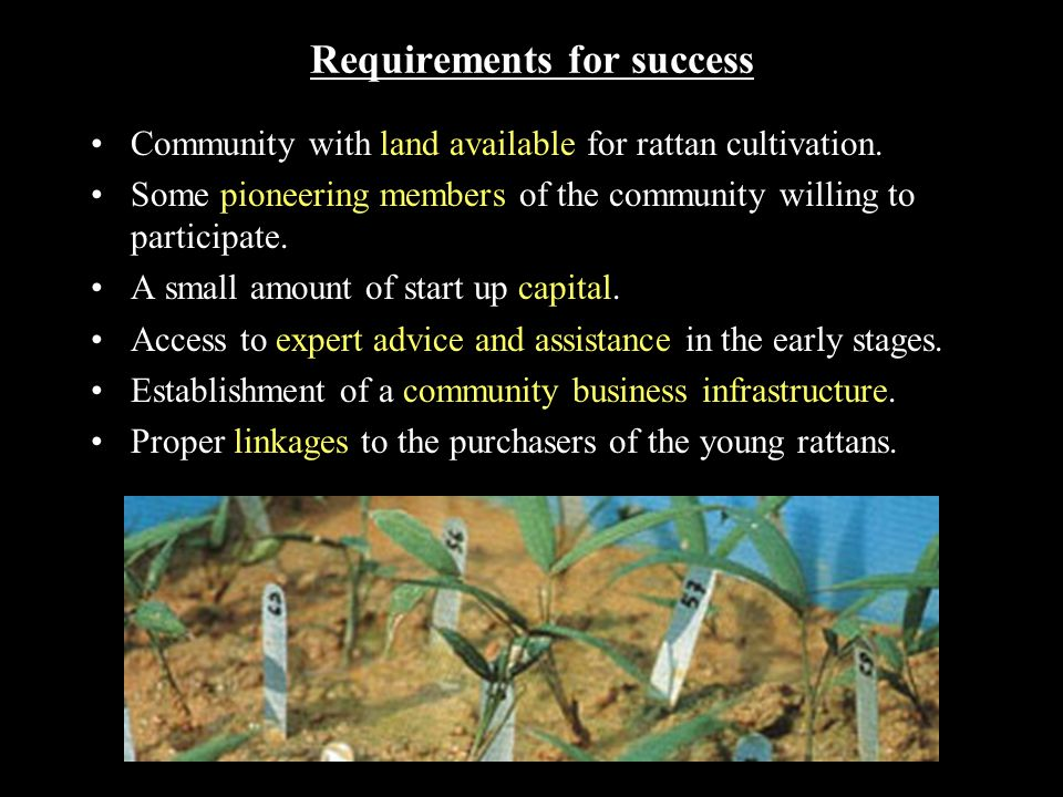 Requirements for success Community with land available for rattan cultivation.