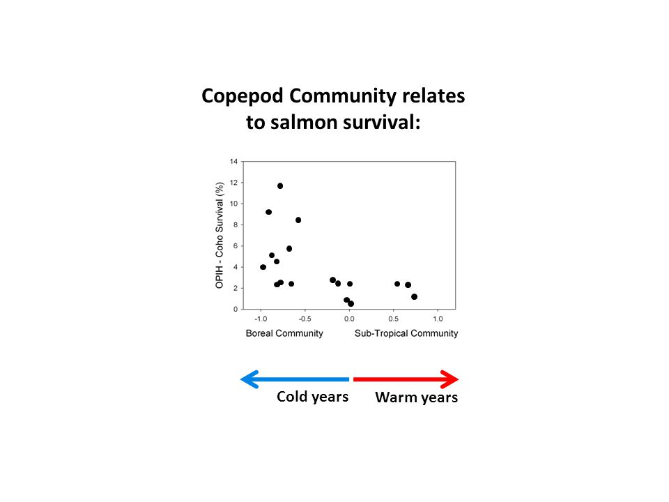 Calanus Warm years Cold years Copepod Community relates to salmon survival: