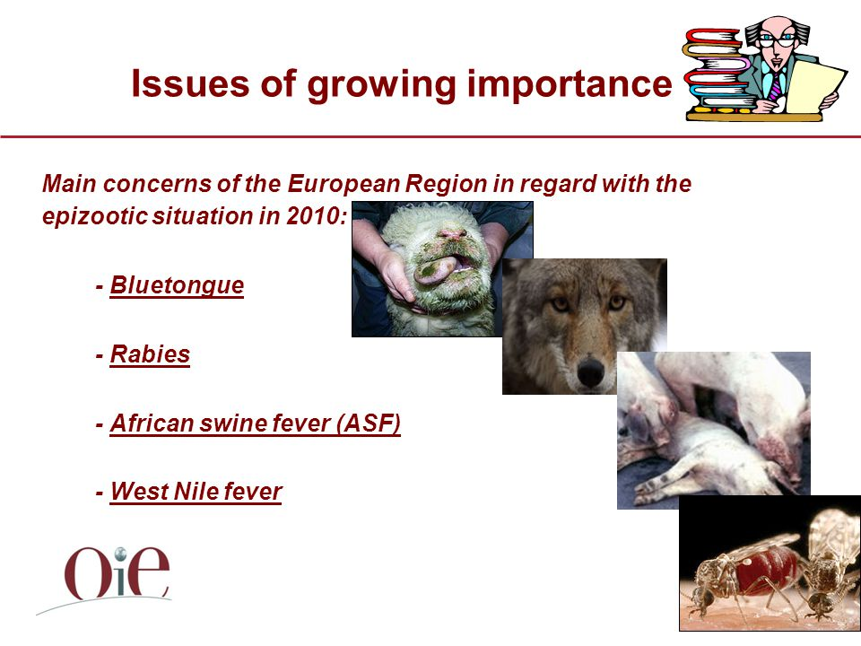 Issues of growing importance Main concerns of the European Region in regard with the epizootic situation in 2010: - Bluetongue - Rabies - African swine fever (ASF) - West Nile fever