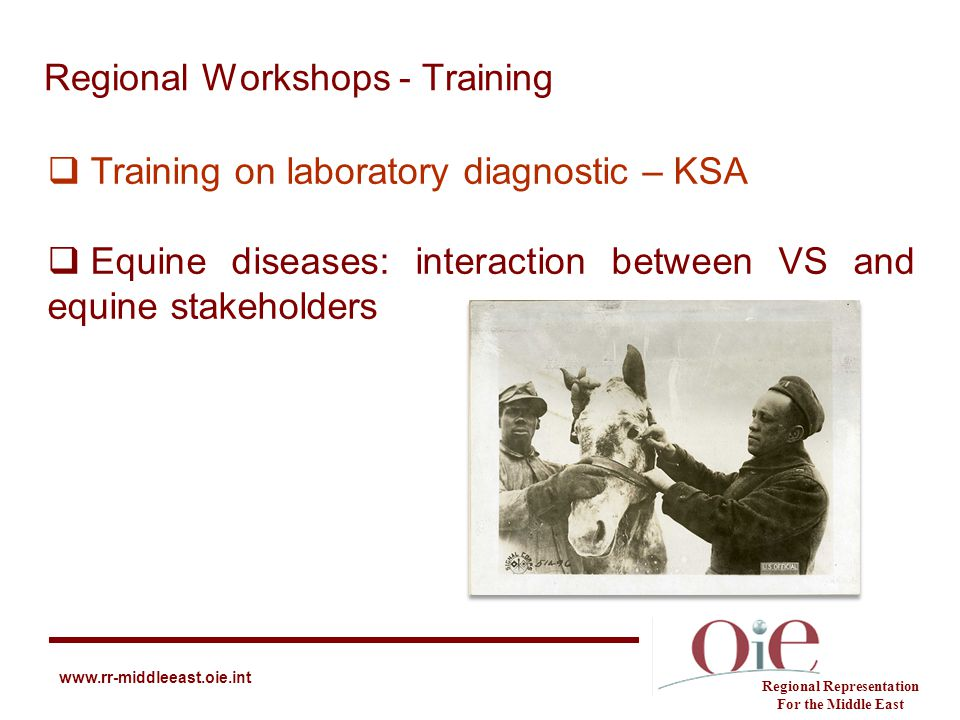 Regional Workshops - Training Regional Representation For the Middle East www.rr-middleeast.oie.int  Training on laboratory diagnostic – KSA  Equine