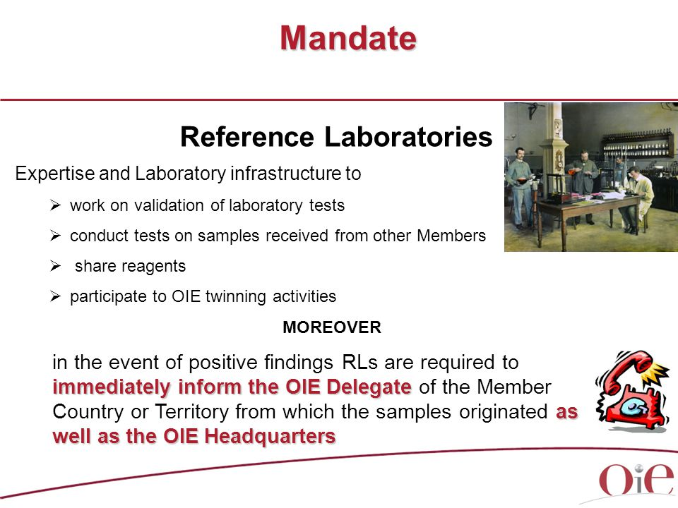 Expertise and Laboratory infrastructure to  work on validation of laboratory tests  conduct tests on samples received from other Members  share reagents  participate to OIE twinning activities MOREOVER Mandate Reference Laboratories immediately inform the OIE Delegate as well as the OIE Headquarters in the event of positive findings RLs are required to immediately inform the OIE Delegate of the Member Country or Territory from which the samples originated as well as the OIE Headquarters