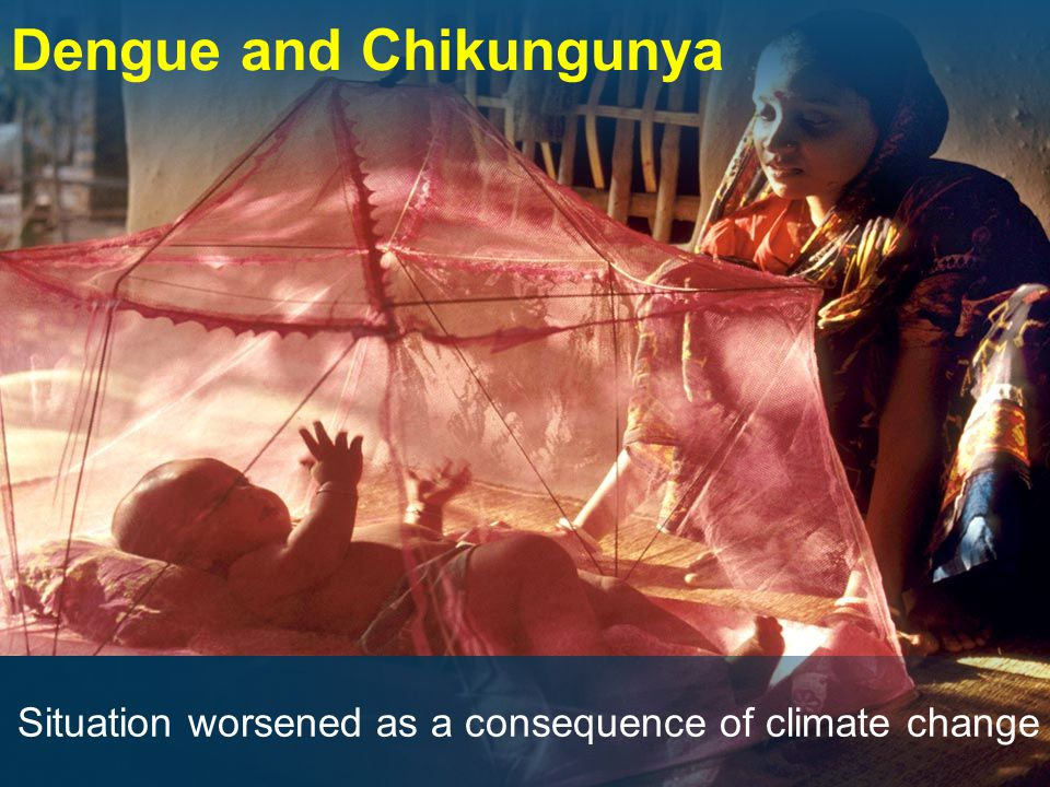 Dengue and Chikungunya Situation worsened as a consequence of climate change