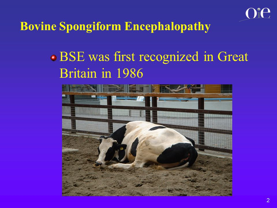 2 Bovine Spongiform Encephalopathy BSE was first recognized in Great Britain in 1986