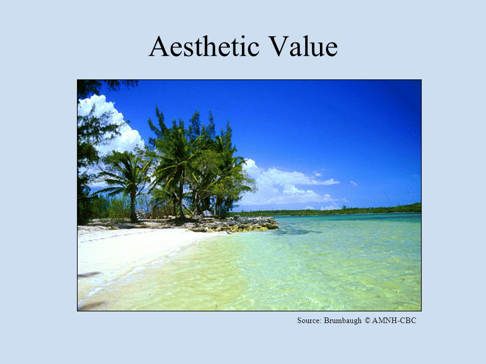 Aesthetic Value Source: Brumbaugh © AMNH-CBC