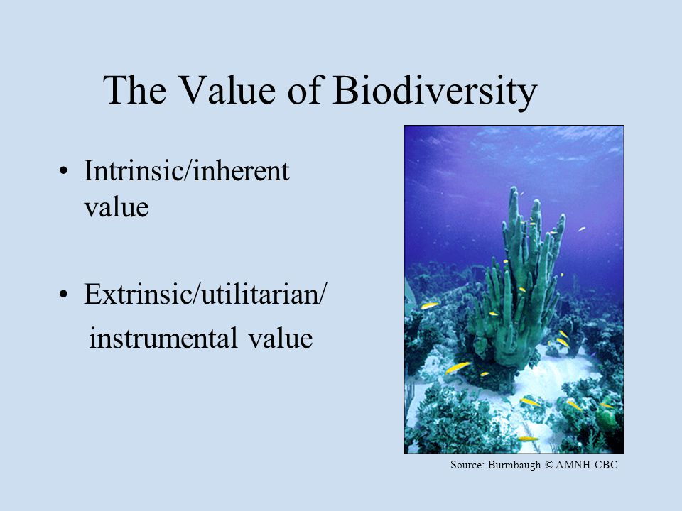 The Value of Biodiversity Intrinsic/inherent value Extrinsic/utilitarian/ instrumental value Source: Burmbaugh © AMNH-CBC