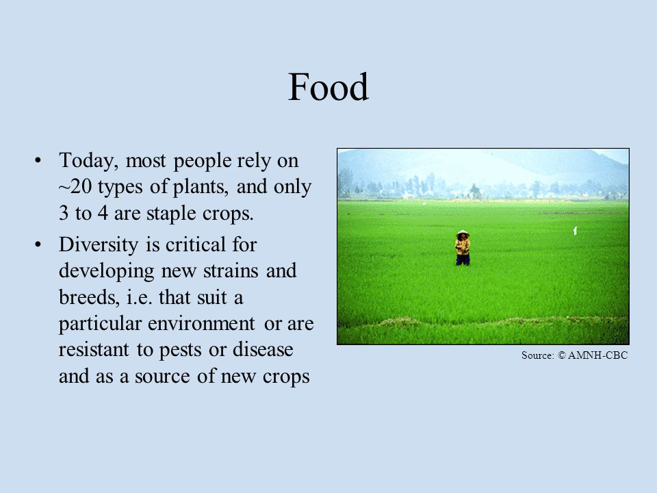 Food Today, most people rely on ~20 types of plants, and only 3 to 4 are staple crops. Diversity is critical for developing new strains and breeds, i.
