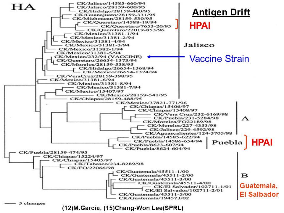 HPAI Vaccine Strain HPAI Guatemala, El Salbador (12)M.Garcia, (15)Chang-Won Lee(SPRL) Antigen Drift