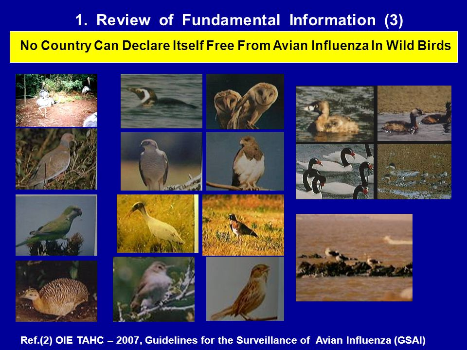 1. Review of Fundamental Information (3) No Country Can Declare Itself Free From Avian Influenza In Wild Birds Ref.(2) OIE TAHC – 2007, Guidelines for