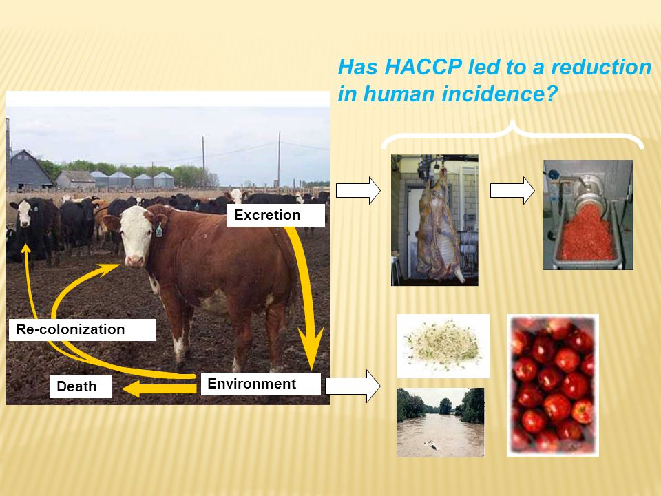 Excretion Re-colonization Environment Death Has HACCP led to a reduction in human incidence