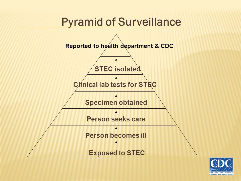 Pyramid of Surveillance Exposed to STEC Person becomes ill Person seeks care Specimen obtained Clinical lab tests for STEC STEC isolated Reported to health department & CDC