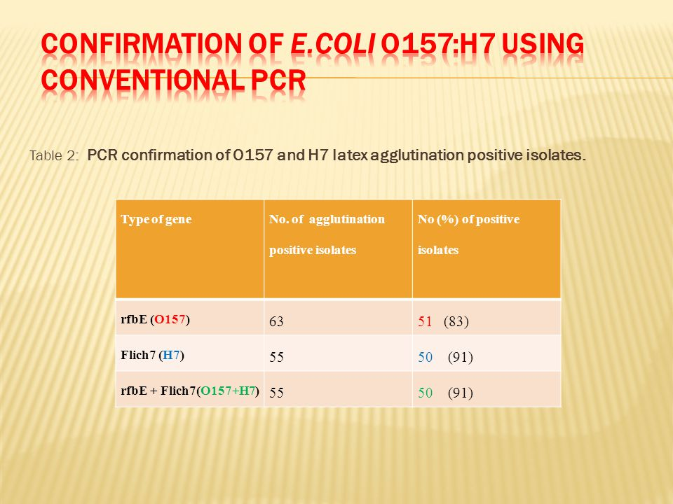 Table 2: PCR confirmation of O157 and H7 latex agglutination positive isolates.