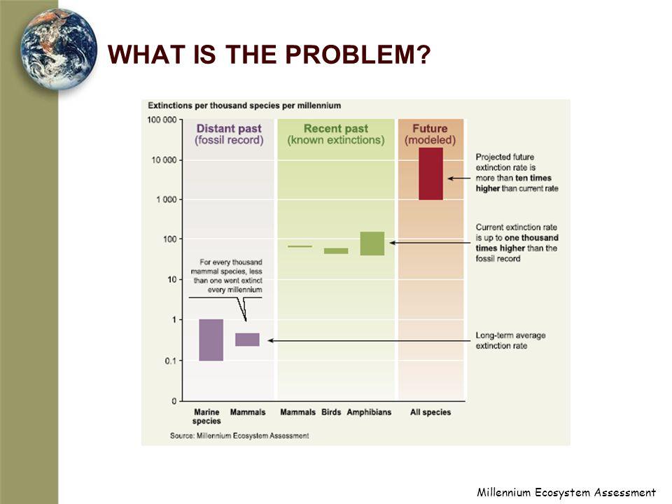 Millennium Ecosystem Assessment WHAT IS THE PROBLEM?