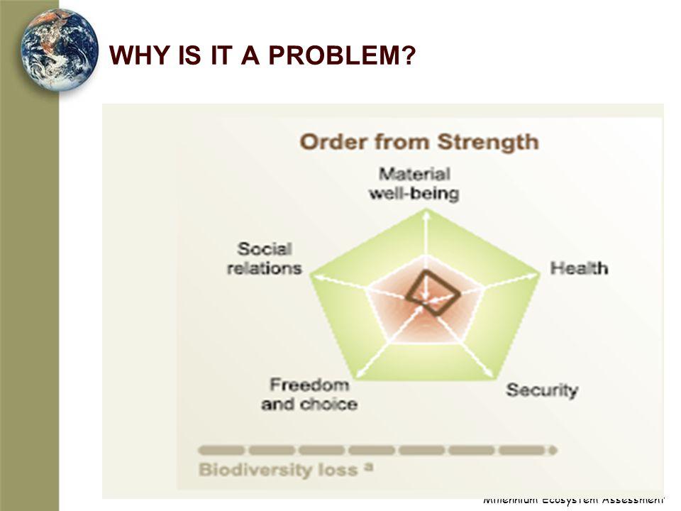 Millennium Ecosystem Assessment WHY IS IT A PROBLEM?