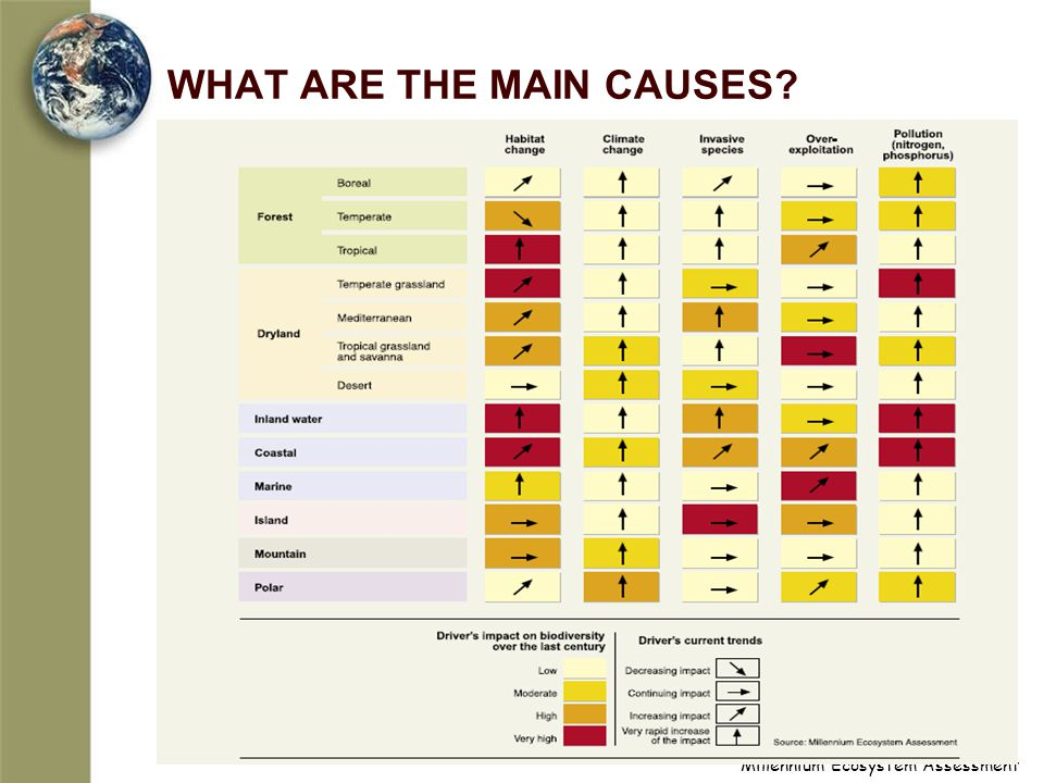 WHAT ARE THE MAIN CAUSES?