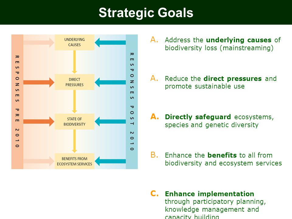 Strategic Goals A. Address the underlying causes of biodiversity loss (mainstreaming) A. Reduce the direct pressures and promote sustainable use A. Di