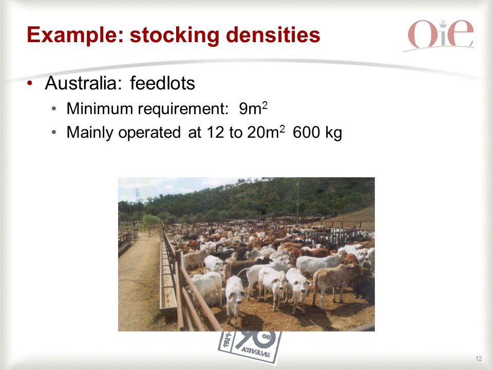 12 Australia: feedlots Minimum requirement: 9m 2 Mainly operated at 12 to 20m 2 600 kg Example: stocking densities