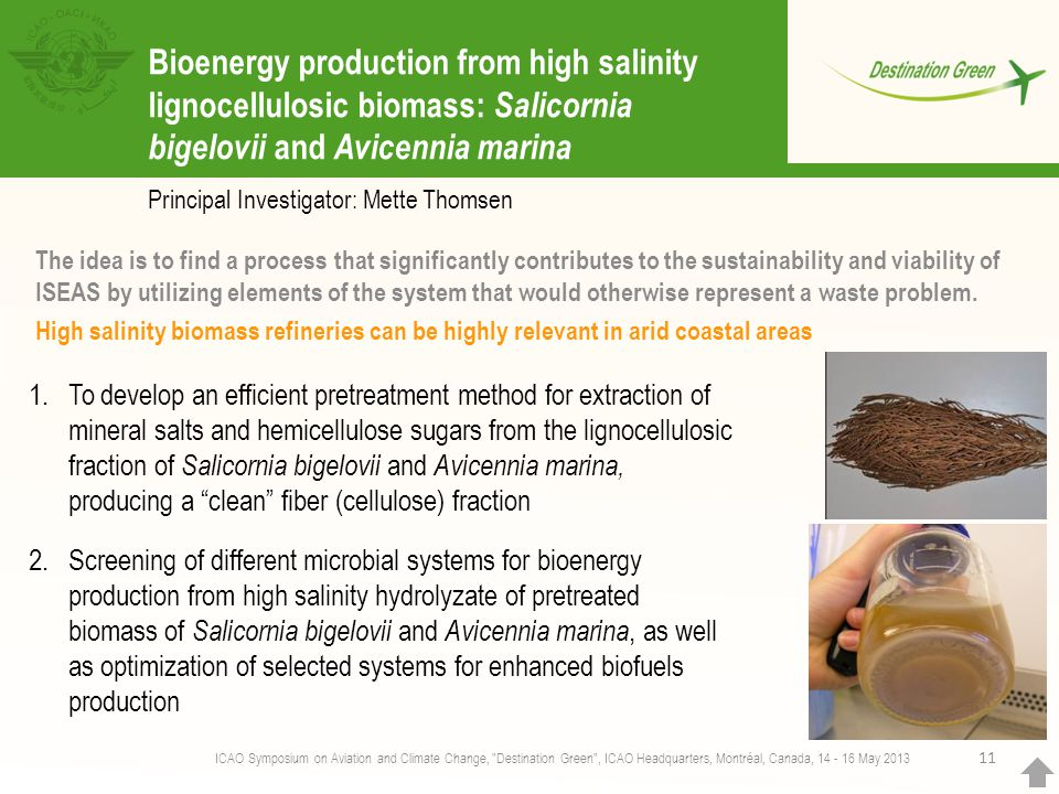 11 Bioenergy production from high salinity lignocellulosic biomass: Salicornia bigelovii and Avicennia marina Principal Investigator: Mette Thomsen Th