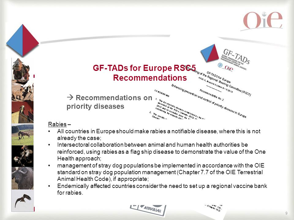 9 GF-TADs for Europe RSC5 Recommendations  Recommendations on priority diseases Rabies – All countries in Europe should make rabies a notifiable disease, where this is not already the case; Intersectoral collaboration between animal and human health authorities be reinforced, using rabies as a flag ship disease to demonstrate the value of the One Health approach; management of stray dog populations be implemented in accordance with the OIE standard on stray dog population management (Chapter 7.7 of the OIE Terrestrial Animal Health Code), if appropriate; Endemically affected countries consider the need to set up a regional vaccine bank for rabies.