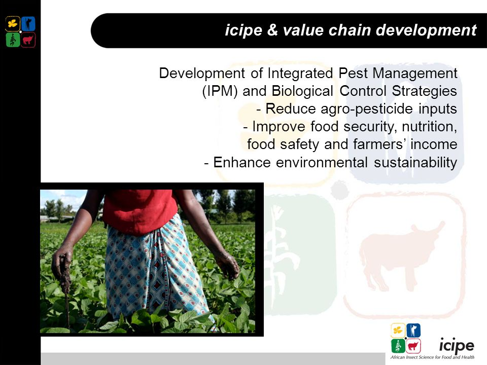Development of Integrated Pest Management (IPM) and Biological Control Strategies - Reduce agro-pesticide inputs - Improve food security, nutrition, food safety and farmers' income - Enhance environmental sustainability icipe & value chain development