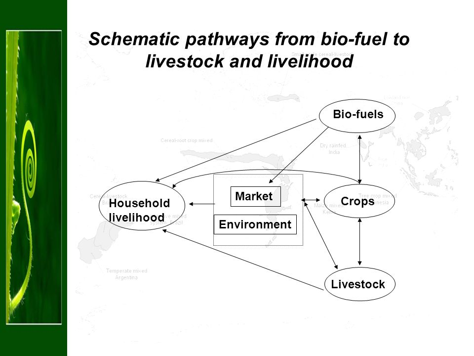 Schematic pathways from bio-fuel to livestock and livelihood Bio-fuels Household livelihood Crops Livestock Market Environment