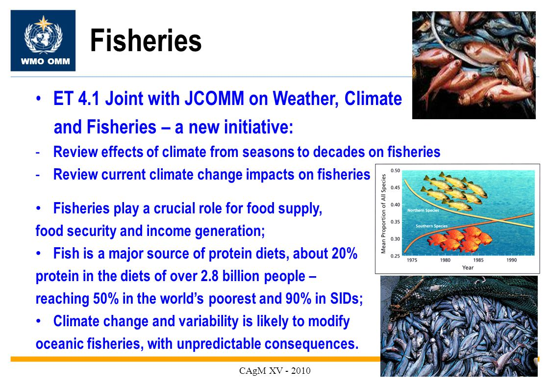 WMO OMM Fisheries CAgM XV ET 4.1 Joint with JCOMM on Weather, Climate and Fisheries – a new initiative: - Review effects of climate from seasons to decades on fisheries - Review current climate change impacts on fisheries Fisheries play a crucial role for food supply, food security and income generation; Fish is a major source of protein diets, about 20% protein in the diets of over 2.8 billion people – reaching 50% in the world's poorest and 90% in SIDs; Climate change and variability is likely to modify oceanic fisheries, with unpredictable consequences.