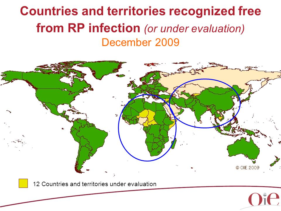 Countries and territories recognized free from RP infection (or under evaluation) December 2009 12 Countries and territories under evaluation