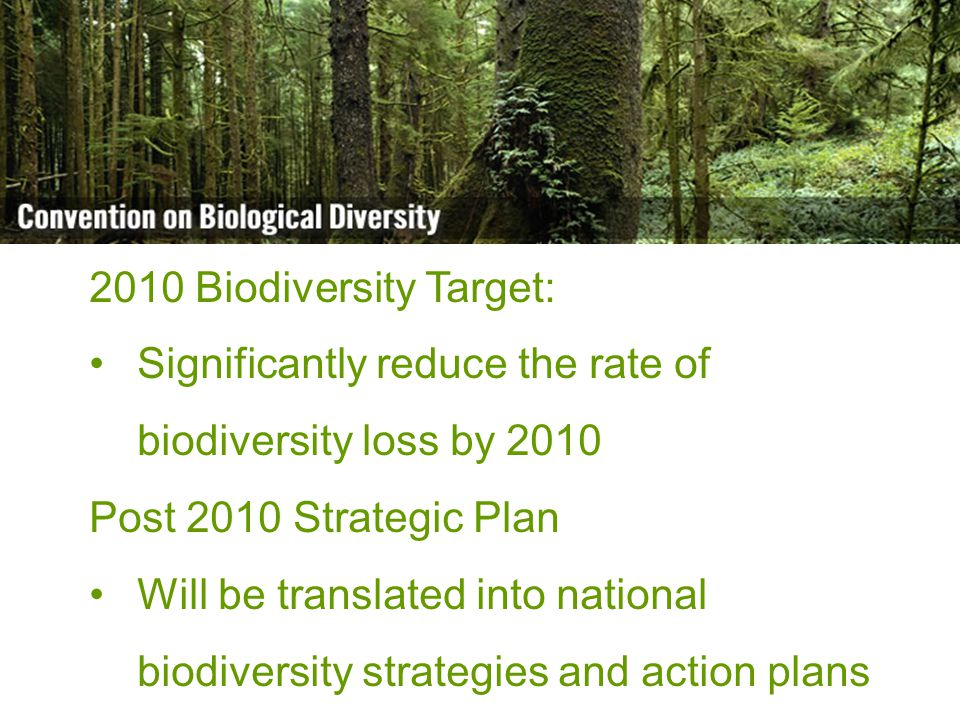 Biodiversity is life Biodiversity is our life 2010 Biodiversity Target: Significantly reduce the rate of biodiversity loss by 2010 Post 2010 Strategic Plan Will be translated into national biodiversity strategies and action plans
