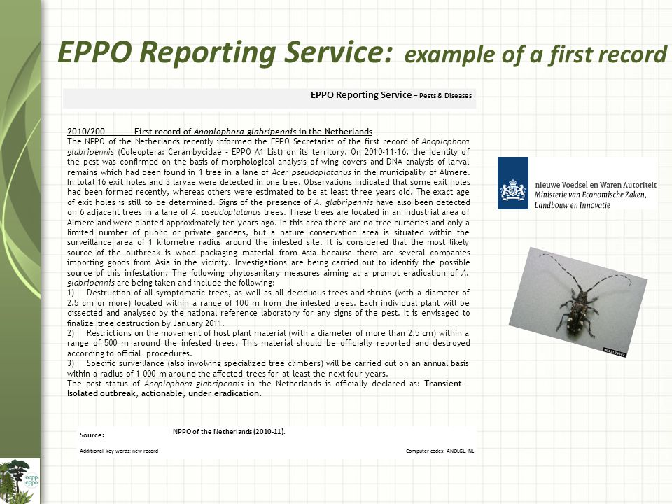 EPPO Reporting Service: example of a first record Source: NPPO of the Netherlands (2010-11).