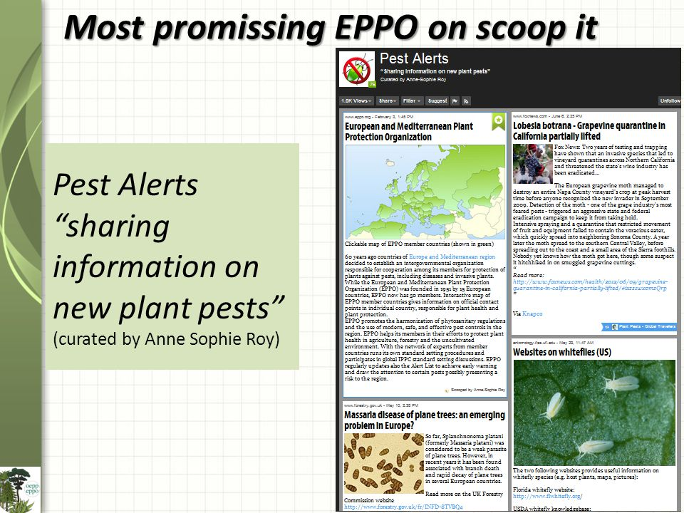 Most promissing EPPO on scoop it Pest Alerts sharing information on new plant pests (curated by Anne Sophie Roy)
