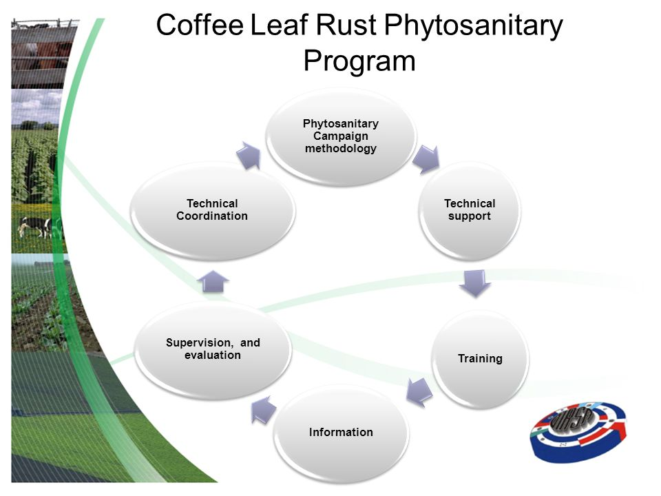 Coffee Leaf Rust Phytosanitary Program Phytosanitary Campaign methodology Technical support TrainingInformation Supervision, and evaluation Technical Coordination