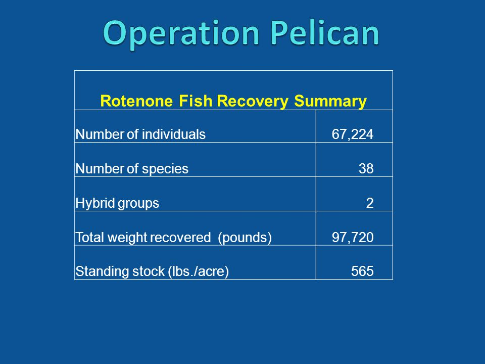 Rotenone Fish Recovery Summary Number of individuals67,224 Number of species38 Hybrid groups2 Total weight recovered (pounds)97,720 Standing stock (lbs./acre)565