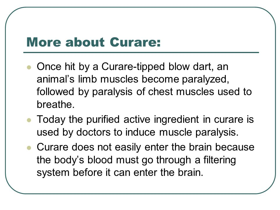 More about Curare: Once hit by a Curare-tipped blow dart, an animal's limb muscles become paralyzed, followed by paralysis of chest muscles used to breathe.