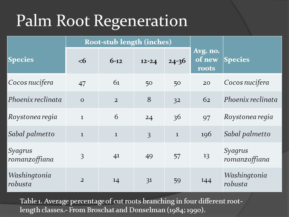 Palm Root Regeneration Species Root-stub length (inches) Avg.
