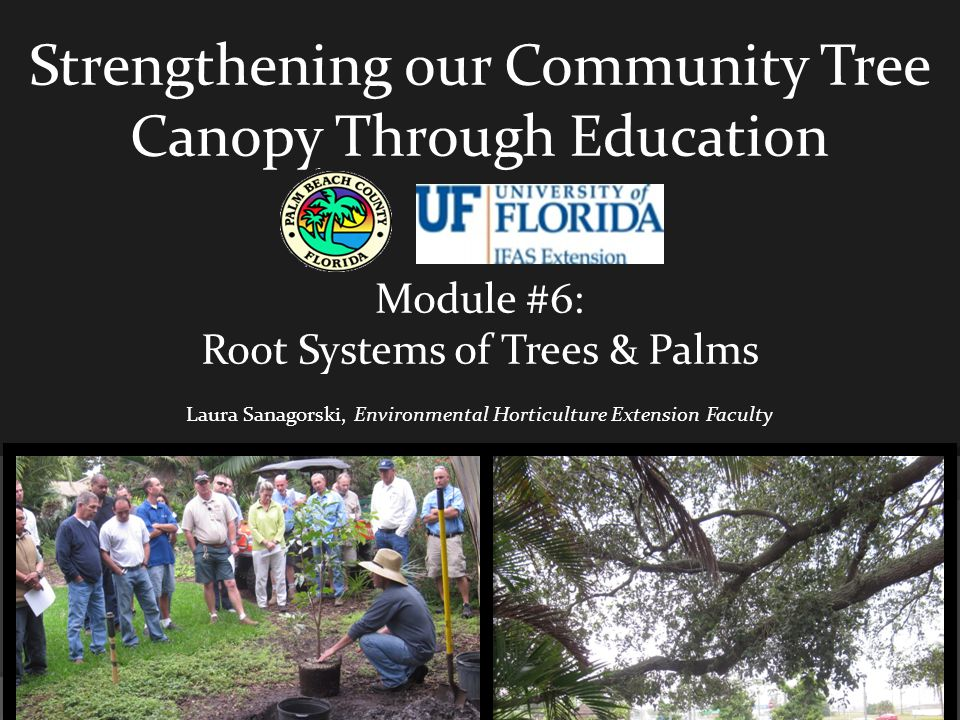 Strengthening our Community Tree Canopy Through Education Module #6: Root Systems of Trees & Palms Laura Sanagorski, Environmental Horticulture Extension Faculty
