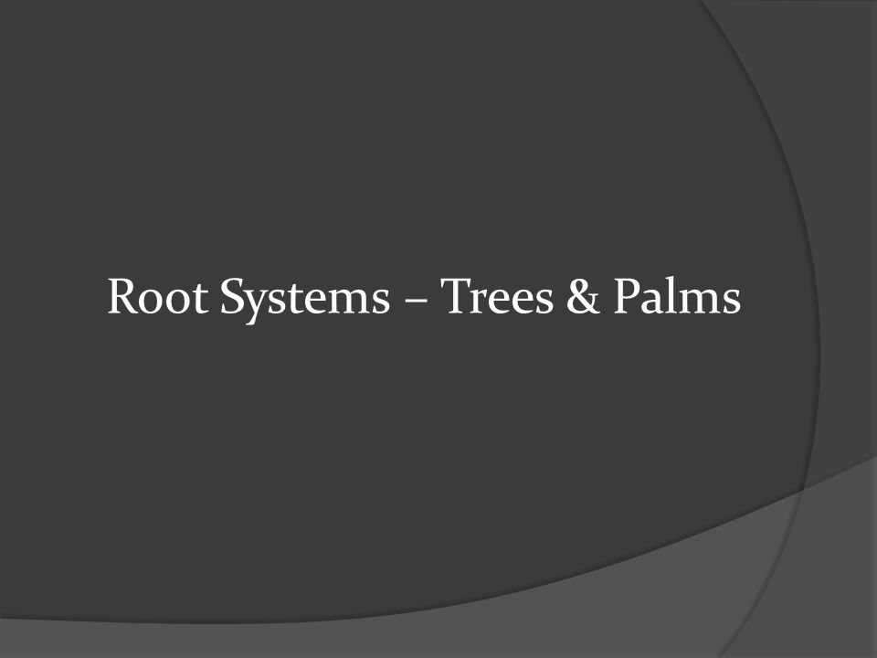 Root Systems – Trees & Palms