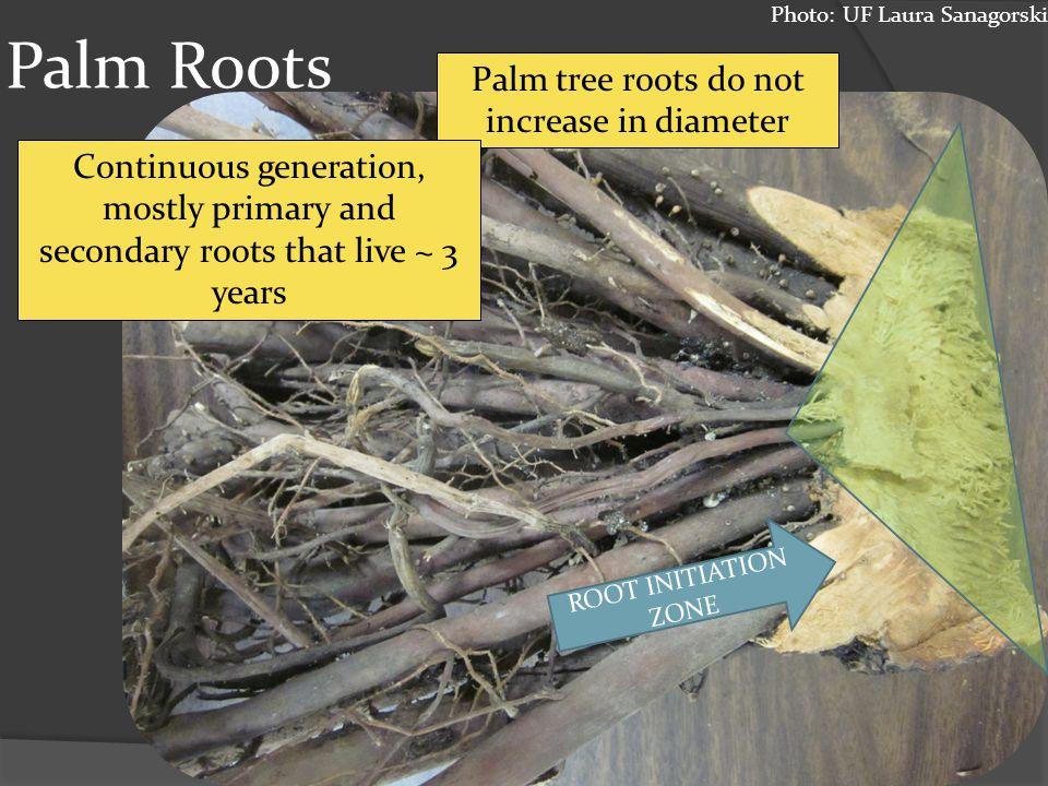 Palm Roots Photos: UF Laura Sanagorski