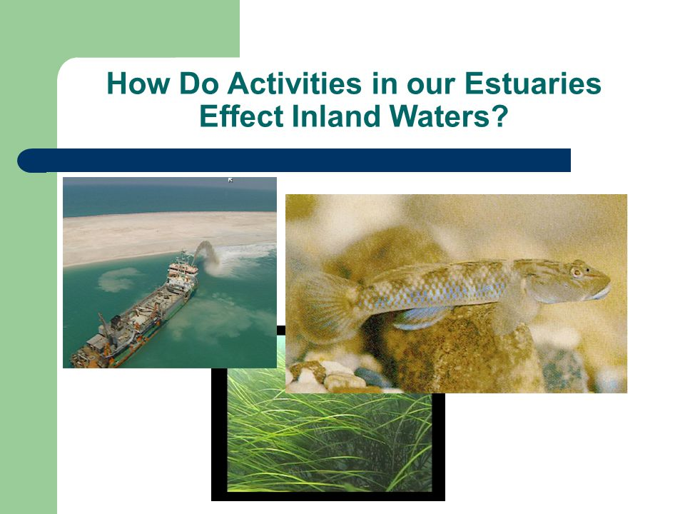 How Do Activities in our Estuaries Effect Inland Waters