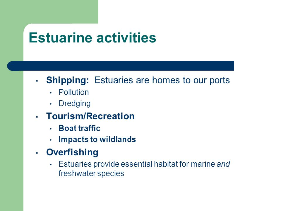 Estuarine activities Shipping: Estuaries are homes to our ports Pollution Dredging Tourism/Recreation Boat traffic Impacts to wildlands Overfishing Estuaries provide essential habitat for marine and freshwater species