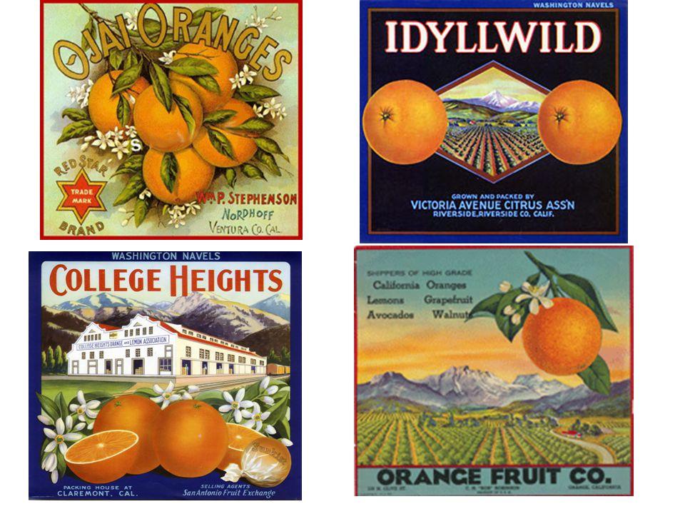 San Dimas Labels