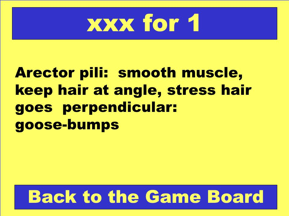 Arector pili: smooth muscle, keep hair at angle, stress hair goes perpendicular: goose-bumps Back to the Game Board xxx for 1