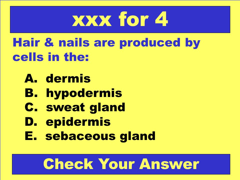 Hair & nails are produced by cells in the: A. dermis B. hypodermis C. sweat gland D. epidermis E. sebaceous gland xxx for 4 Check Your Answer