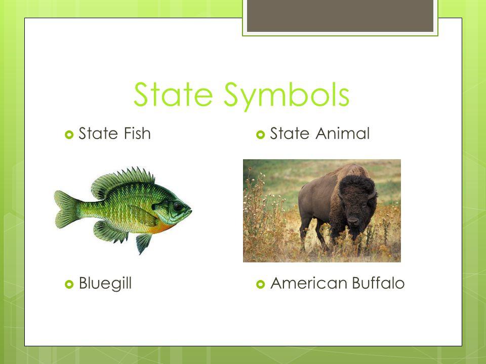 State Symbols  State Animal  American Buffalo  State Fish  Bluegill