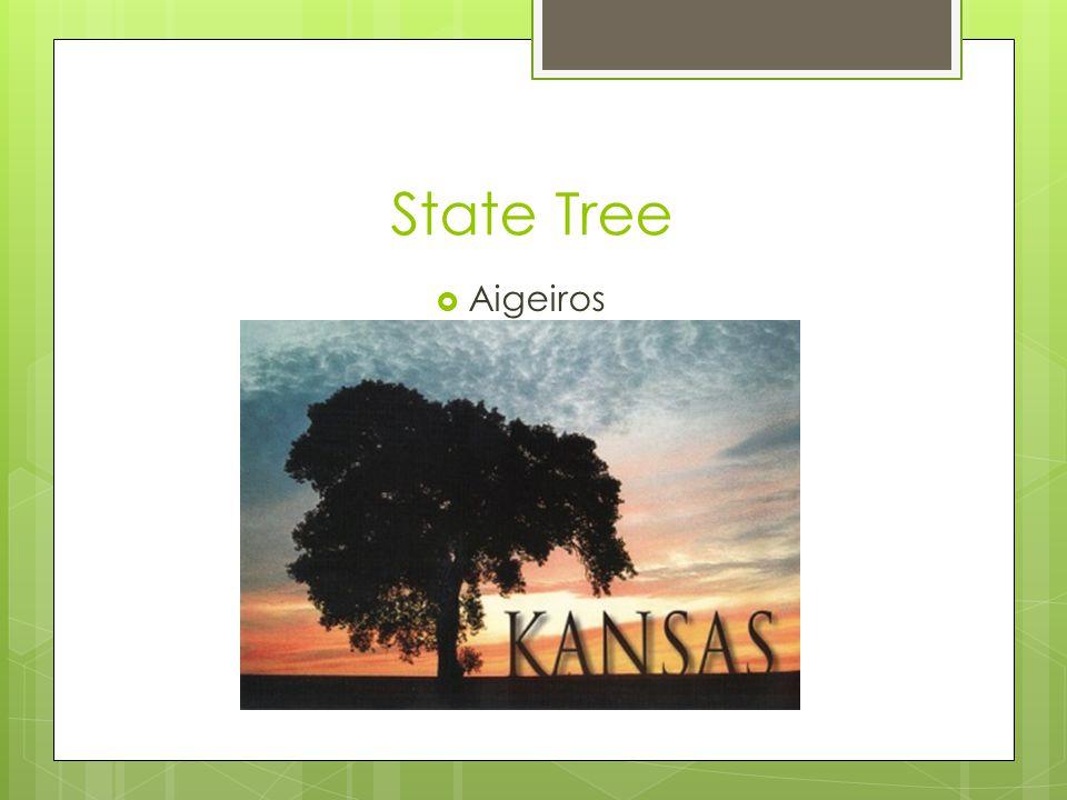 State Tree  Aigeiros