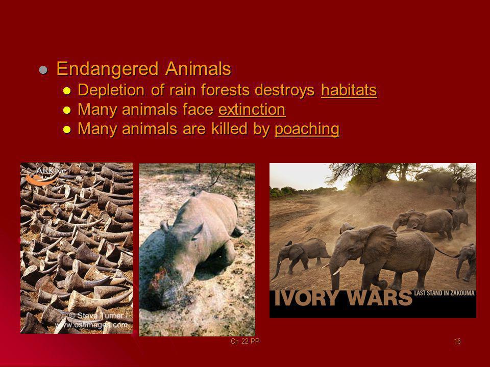 Endangered Animals Endangered Animals Depletion of rain forests destroys habitats Depletion of rain forests destroys habitats Many animals face extinc