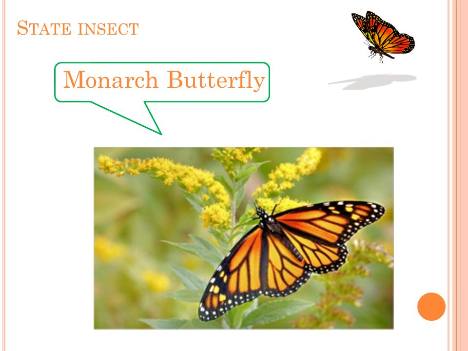 S TATE INSECT Monarch Butterfly